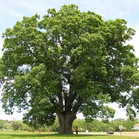 Learn to identify trees - Bucket List Ideas
