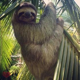 Hold a Sloth - Bucket List Ideas