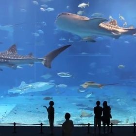 Visit the  Okinawa Churaumi Aquarium in Japan - Bucket List Ideas