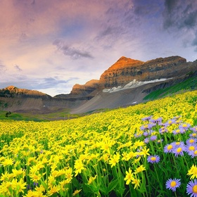 Visit the valley of the flowers in India - Bucket List Ideas