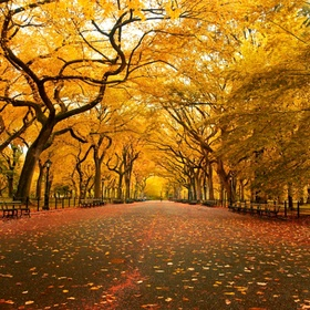Fall day in central park - Bucket List Ideas