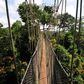 Walk over the Kakum Canopy walk in Ghana - Bucket List Ideas