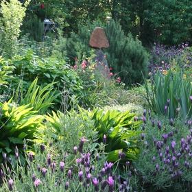 Grow an Herb, Vegetable, and/or Flower Garden - Bucket List Ideas