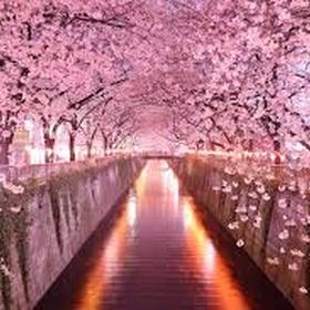 Visit Japan during Sakura Season - Bucket List Ideas