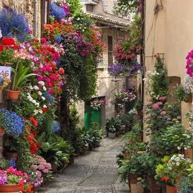 Own Fresh Flower & Gift Shop - Bucket List Ideas
