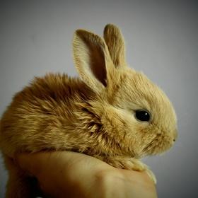 Visit Bunny Island, Japan - Bucket List Ideas
