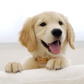 Adopt a Second Dog - Bucket List Ideas