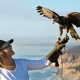 Take a falconry class - Bucket List Ideas