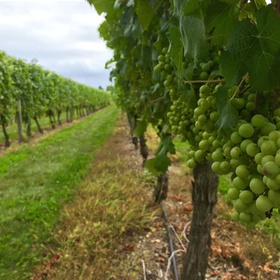 Go wine tasting in Argentina - Bucket List Ideas