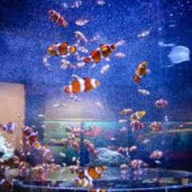 Swim in the predator tank at the Two Oceans Aquarium - Bucket List Ideas