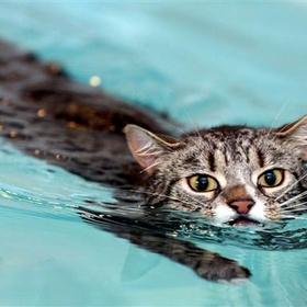 Learn how to swim - Bucket List Ideas
