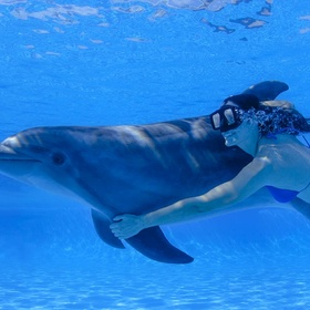 Swim with dolphins - Bucket List Ideas