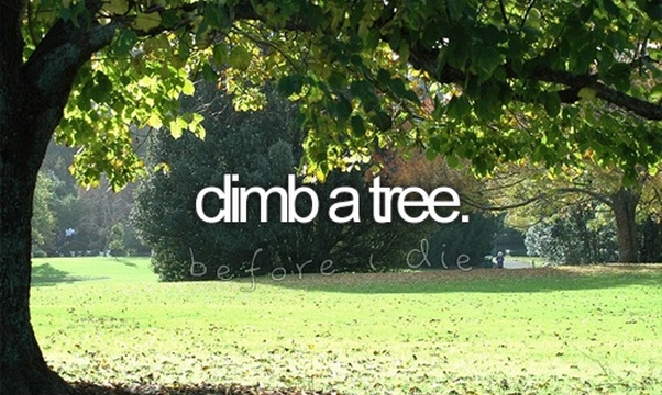 Climb a tree - Bucket List Ideas