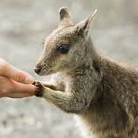 Play with a Wallaby at Fall City Wallaby Ranch in Washington - Bucket List Ideas