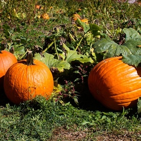 Autumn - Visit A Pumpkin Patch - Bucket List Ideas