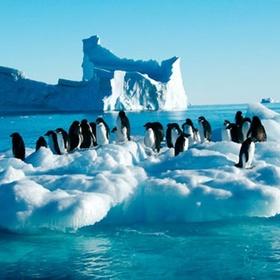 Admire the Wildlife in Antartica - Bucket List Ideas