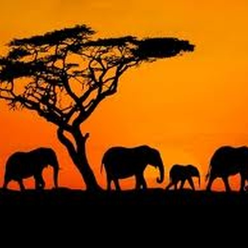 Go on a safari in africa - Bucket List Ideas