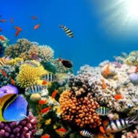Scuba Dive around Coral Reed - Bucket List Ideas
