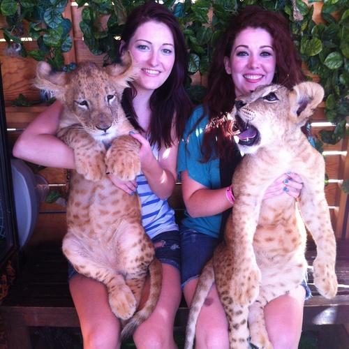 Hold a Lion Cub! - Bucket List Ideas