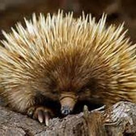 Pet a porcupine - Bucket List Ideas