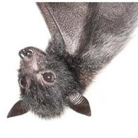 Become a Bat QLD Carer - Bucket List Ideas