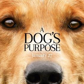 Kijk naar A Dog's Purpose - Bucket List Ideas