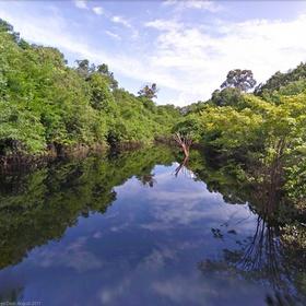 See a Rainforest - Bucket List Ideas