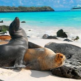 Island Hop in the Galapagos - Bucket List Ideas