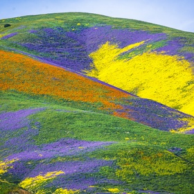Visit Carrizo Plain National Monument, California - Bucket List Ideas