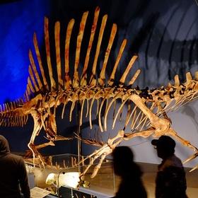 See a Spinosaurus skeleton - Bucket List Ideas