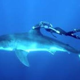 Swim with sharks - Bucket List Ideas