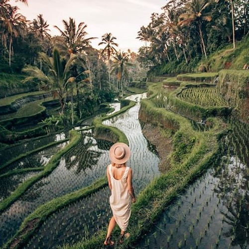 Explore Tegalalang Rice Terraces~ Bali - Bucket List Ideas