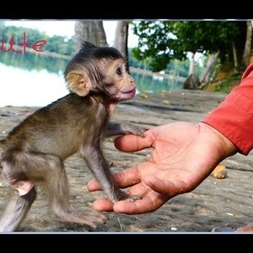 Play with Monkeys - Bucket List Ideas