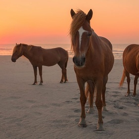 Visit Assateague Island, Virginia - Bucket List Ideas