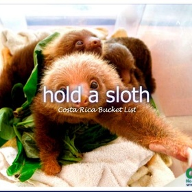 Hold a Sloth - Bucket List Ideas