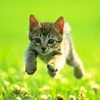 Poopie Kitty's avatar image