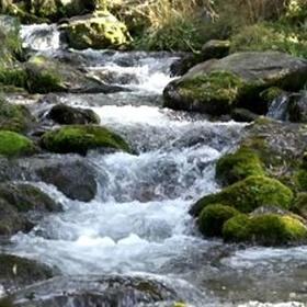 Drink fresh water from a stream - Bucket List Ideas