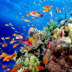 Swim Great Barrier Reef - Bucket List Ideas