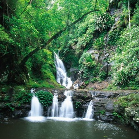Visit Gondwana Rainforests of Australia - Bucket List Ideas