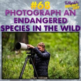 Photograph an Endangered Species In The Wild - Bucket List Ideas
