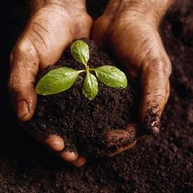 Planting Seeds - Bucket List Ideas