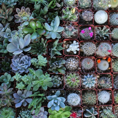 Having cactus plant collection - Bucket List Ideas
