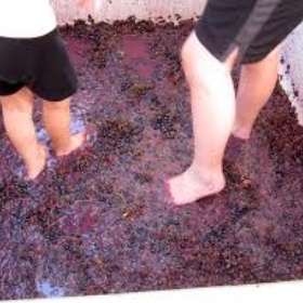 Crush grapes with my feet in a vineyard - Bucket List Ideas