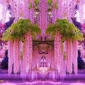 Walk Through the Magical Wisteria Tunnels in The Kawachi Fuji Gardens in Japan - Bucket List Ideas