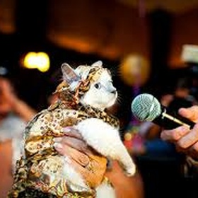 Attend a Cat Fashion show - Bucket List Ideas