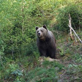 Einen wilden Bären beobachten - Bucket List Ideas