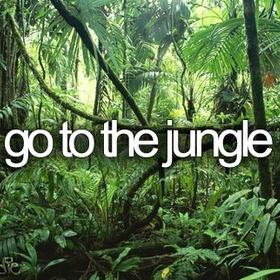 Go to the rainforest/jungle - Bucket List Ideas