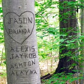 Carve My Name into a Tree - Bucket List Ideas