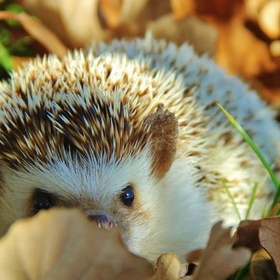 See a hedgehog in the wild - Bucket List Ideas
