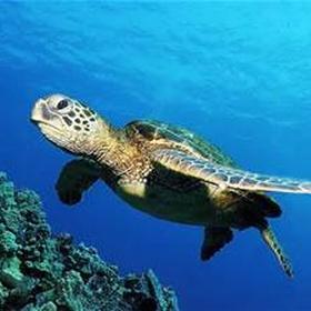 Swim with sea turtles - Bucket List Ideas
